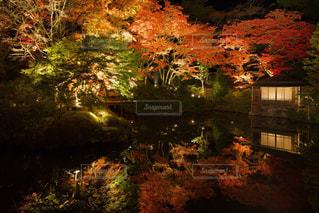自然,秋,紅葉,日光,リフレクション,栃木県,逍遥園,輪王寺