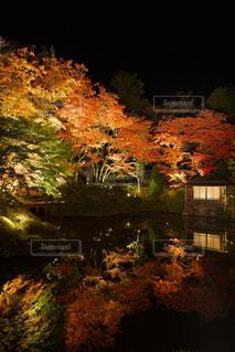 自然,秋,紅葉,日光,逍遥園,輪王寺