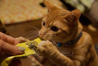 猫を抱いている人の写真・画像素材[4242812]