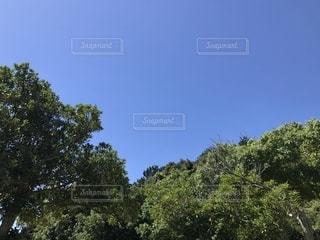 空,秋,木,青空,晴天