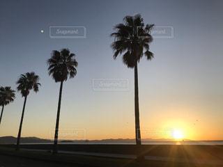 風景,空,屋外,太陽,砂浜,海岸,光,樹木,ヤシの木,草木,パーム