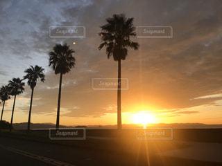 夕日が背景にある木の写真・画像素材[2874067]