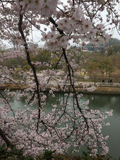 春 - No.423947