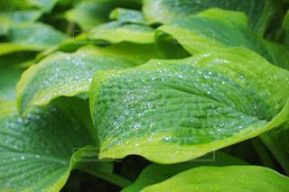 雨,屋外,新緑,梅雨,6月