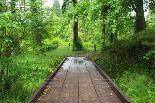 雨,屋外,景色,道,新緑,梅雨,6月