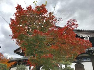 家の前に木の写真・画像素材[875602]