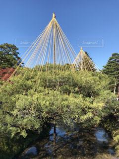 自然,風景,空,屋外,石川県,金沢,兼六園,11月,冬支度