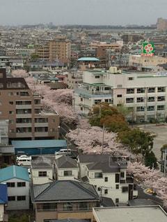 桜並木,小学校,スーパー,ライフ,桜のトンネル