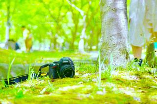 緑色 - No.466941
