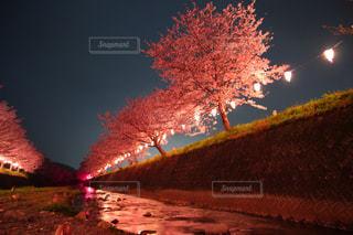 春の写真・画像素材[424922]