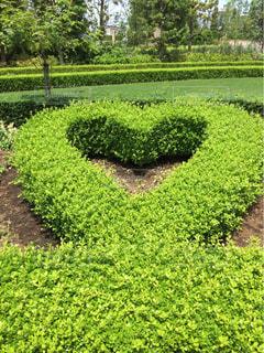 #ハート#庭園#ハートの刈込み#ディズニーランドホテル#ディズニーの写真・画像素材[446766]