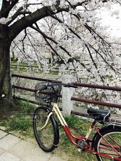 自転車 桜 サイクリング ママチャリ