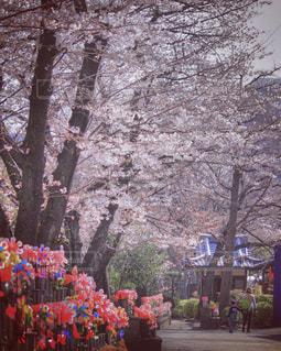 春 - No.425550