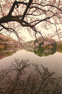 春 - No.425557