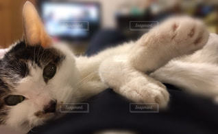 近くに白い表面で横になっている猫のアップ - No.982069