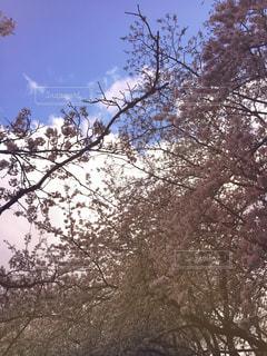 春の写真・画像素材[426907]