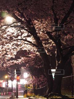 春の写真・画像素材[426400]