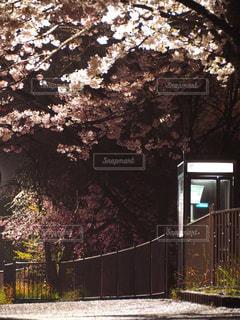 春の写真・画像素材[426505]