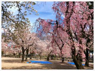 #高崎公園 #群馬県 #高崎市 #公園 #桜 #春