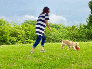 犬 - No.444458