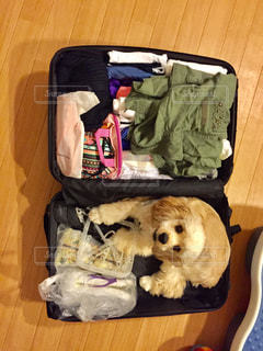 犬,ペット,旅,トランク,アメリカンコッカースパニエル