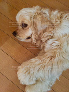 犬の写真・画像素材[475526]