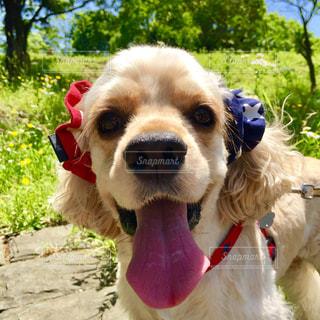その口の中に赤いフリスビー犬 - No.974502