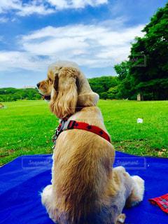 草の中に座っている犬 - No.974629