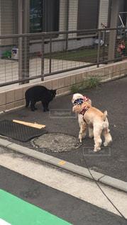 歩道の上を歩く犬 - No.974714