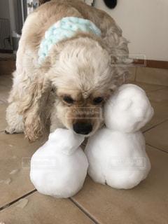 茶色と白犬 - No.976658