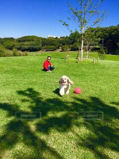 犬,自然,空,屋外,散歩,休日,日中