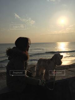 犬,自然,空,屋外,散歩,海岸,影,夕陽,休日