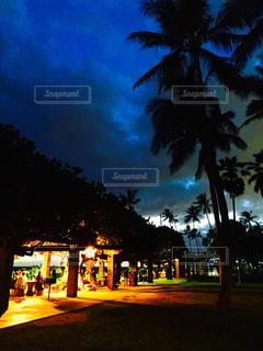 曇り夜でヤシの木のグループ - No.1023245