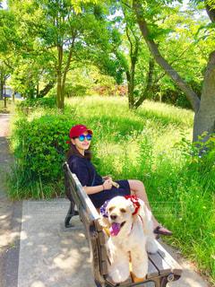 ベンチに座っている犬 - No.1160912