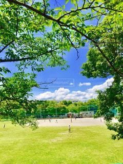 公園の大きな木 - No.1160916