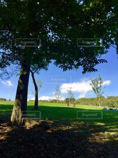 芝生広場の大きな木 - No.1160928