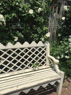 庭に座っている木製のベンチ - No.1160943