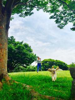 背景の木と芝生のフィールドで牛の立っています。 - No.1185635