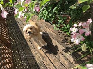 ベンチに座っている犬 - No.1251438