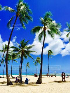 ヤシの木とビーチの人々 のグループの写真・画像素材[1315652]