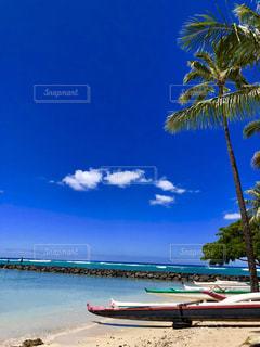 ビーチでヤシの木のグループの写真・画像素材[1386980]