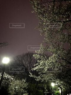 公園の写真・画像素材[420698]