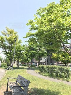 公園の写真・画像素材[454486]