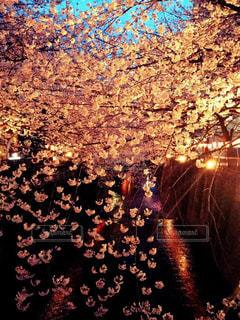 春の写真・画像素材[429466]