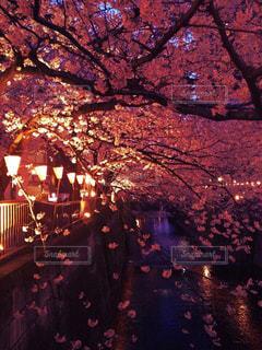 春 - No.429477