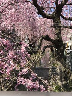 春の写真・画像素材[429510]