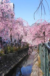 春の写真・画像素材[430136]