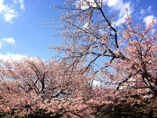 春の写真・画像素材[430141]
