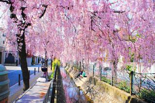 春の写真・画像素材[430728]