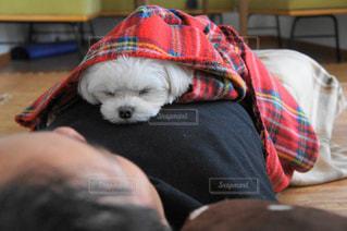 犬の写真・画像素材[472511]